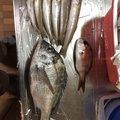 ゲストさんの石川県能美市での釣果写真
