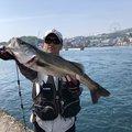 aknrdbsさんの兵庫県明石市での釣果写真