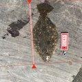 ガンナーズさんの石川県かほく市でのヒラメの釣果写真