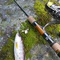 釣りおますさんの大分県日田市での釣果写真