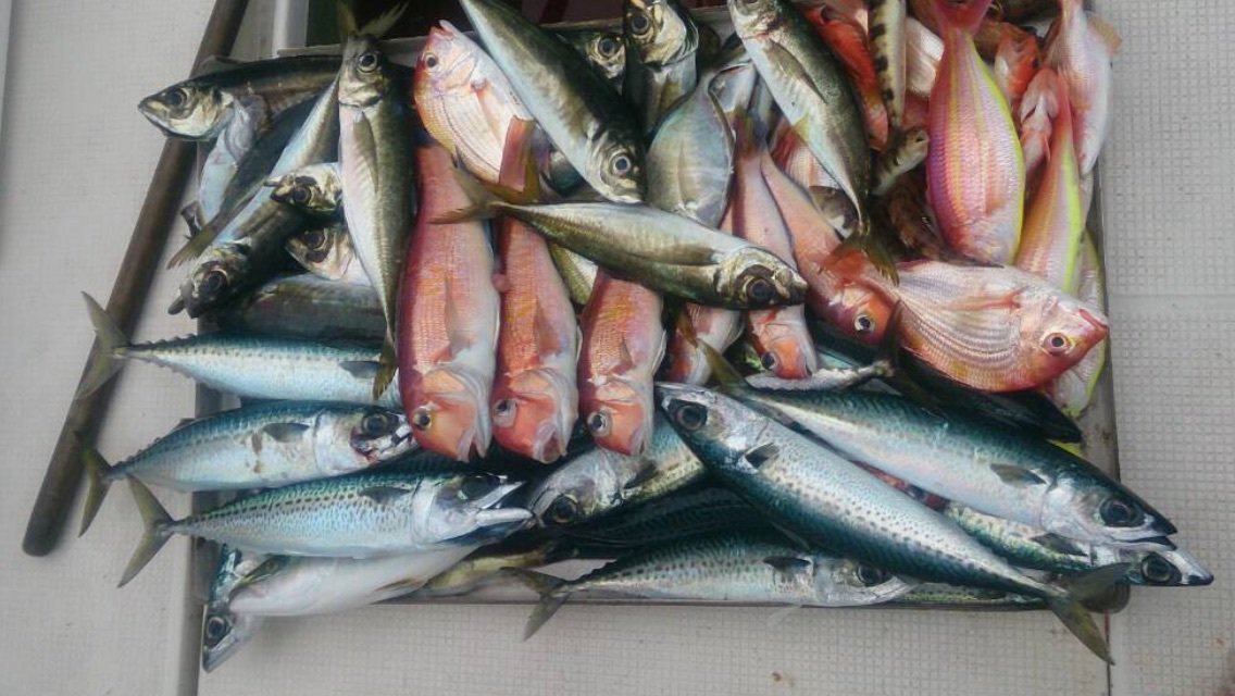 天海さんの投稿画像,写っている魚は