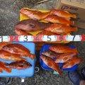 釣太さんの熊本県天草郡での釣果写真