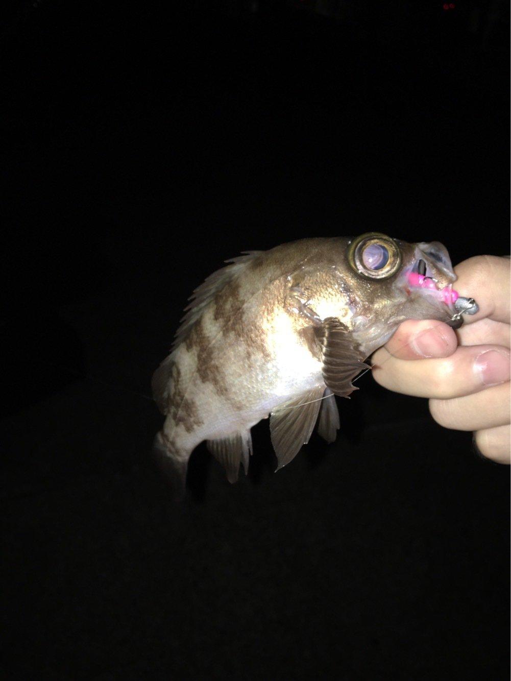 ノックさんの投稿画像,写っている魚はメバル