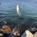 釣人さんの大分県での釣果写真