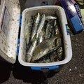 根掛かりのプロさんの北海道函館市での釣果写真