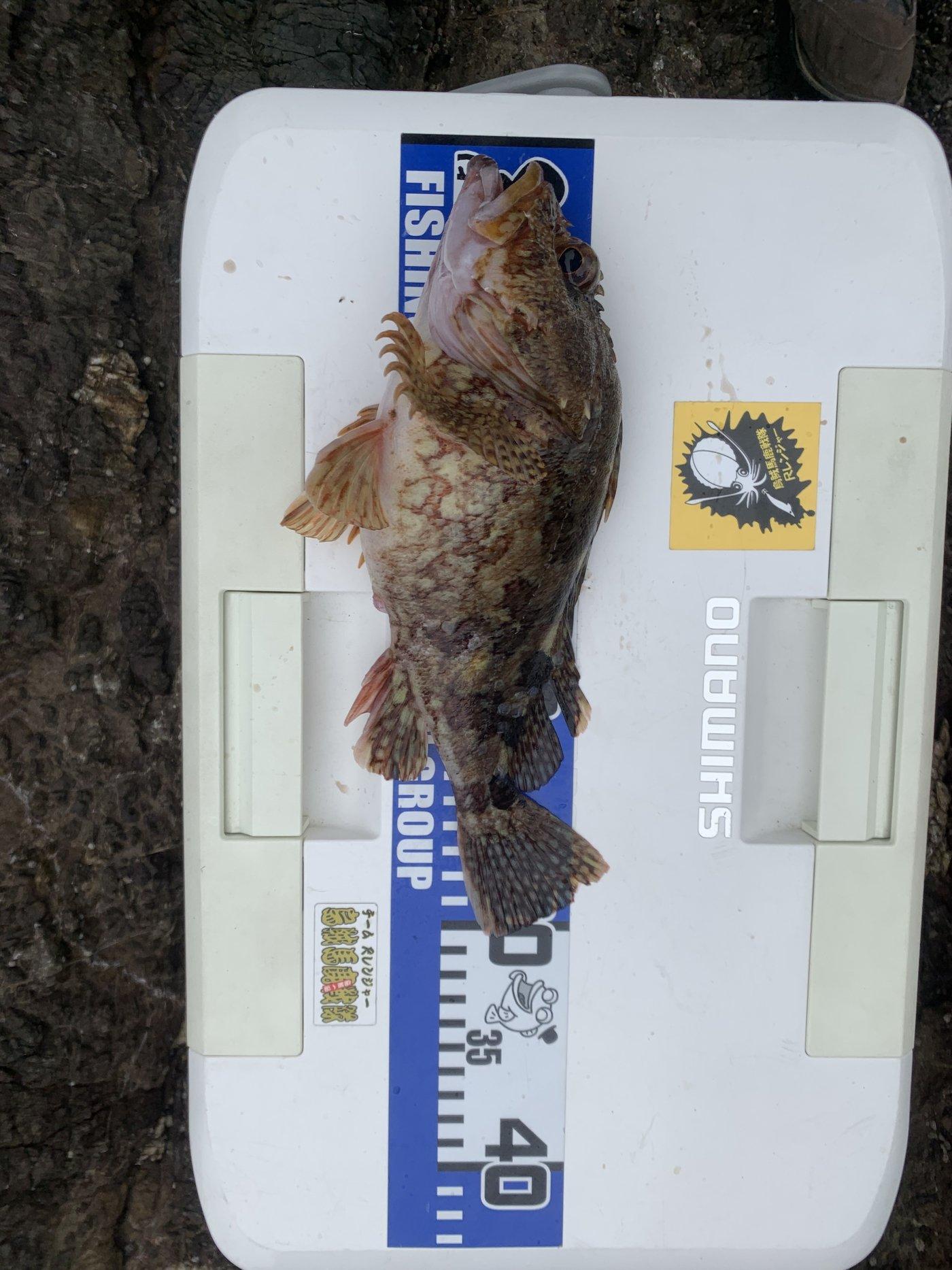 ブルーさんの投稿画像,写っている魚はカサゴ