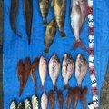 ぽいさんの鹿児島県出水郡での釣果写真