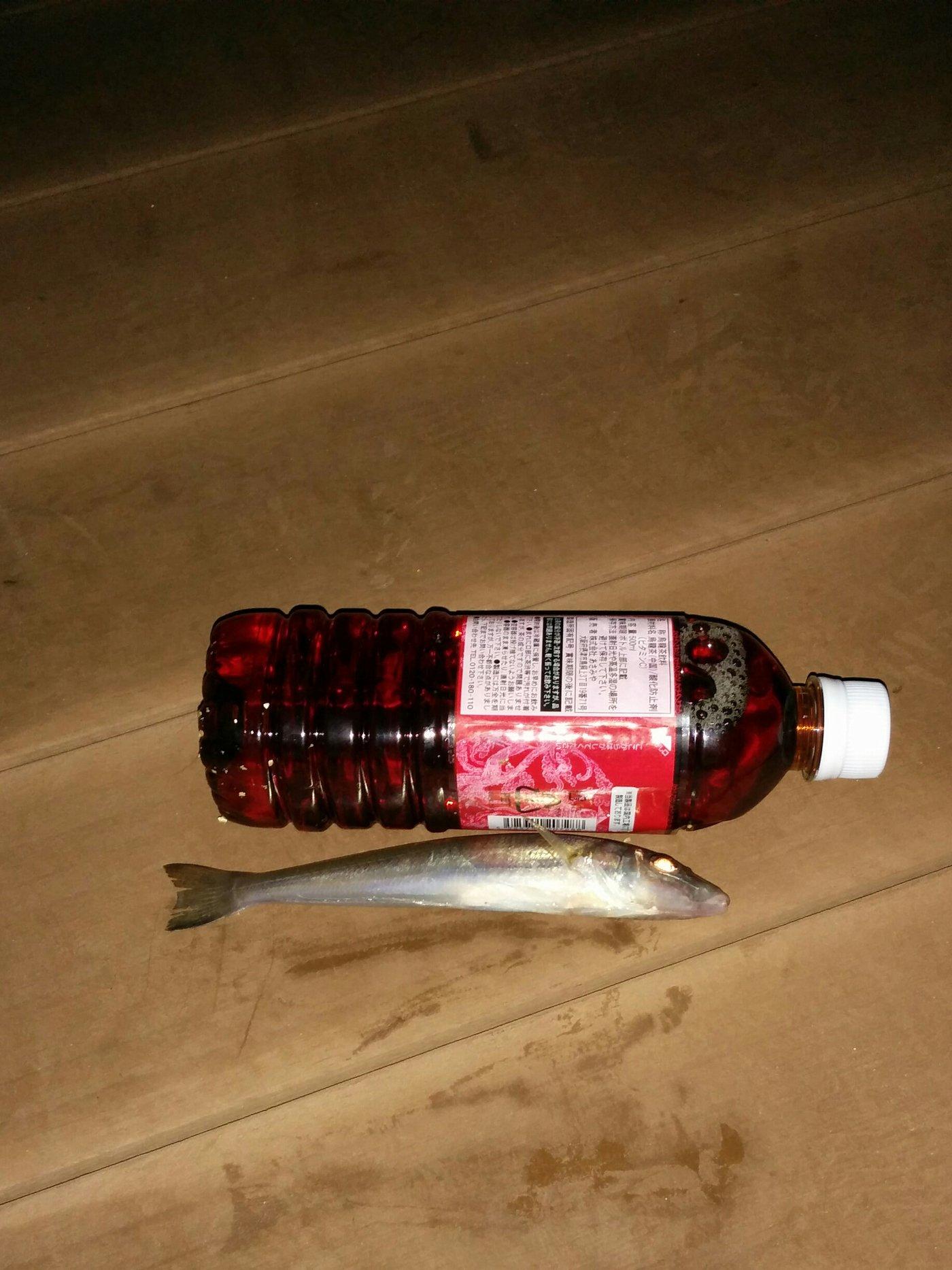 かいていじんさんの投稿画像,写っている魚は