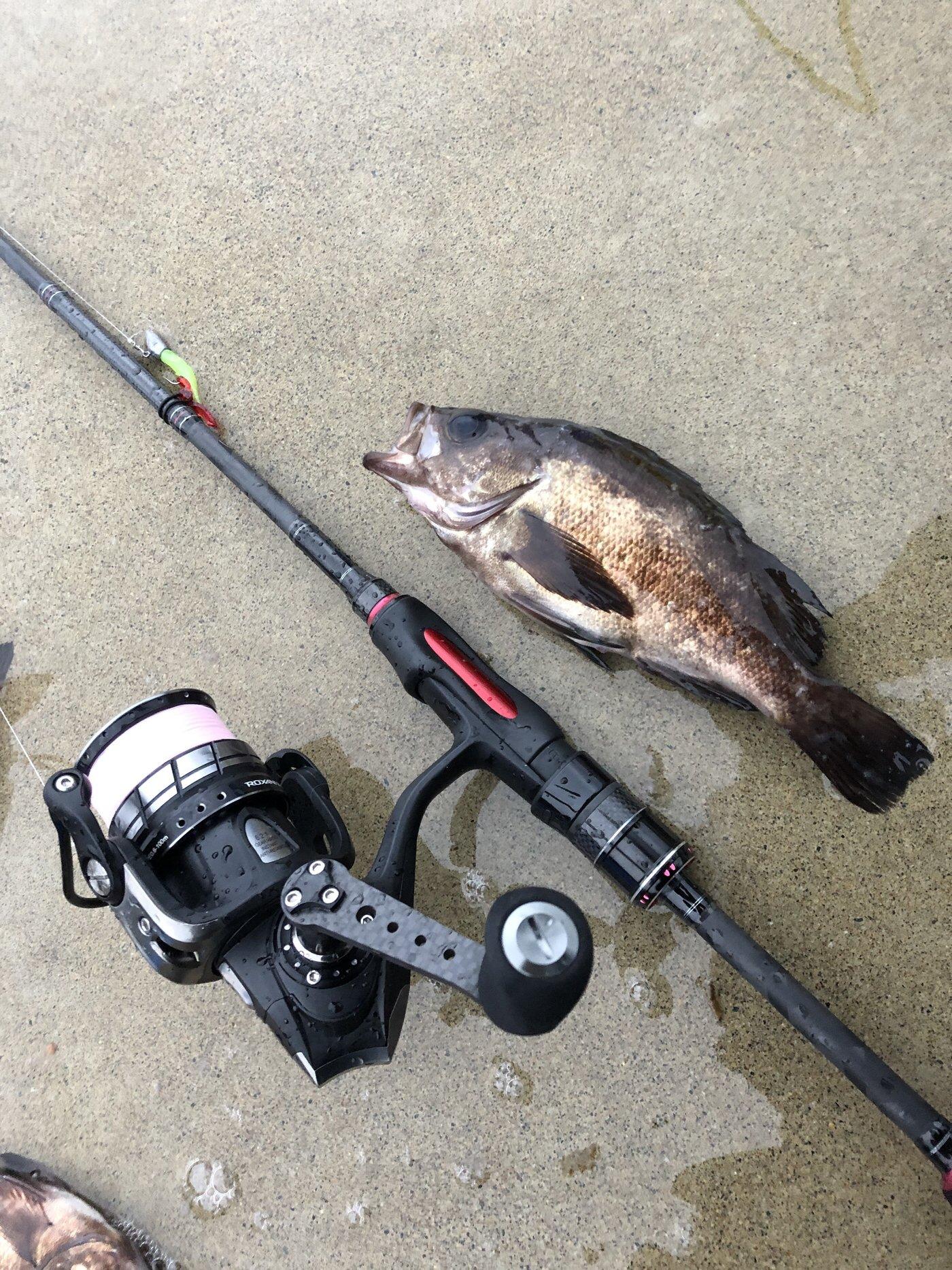 rinoさんの投稿画像,写っている魚はメバル