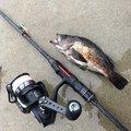 rinoさんの宮城県牡鹿郡での釣果写真
