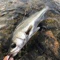ナオキさんの鹿児島県薩摩郡での釣果写真