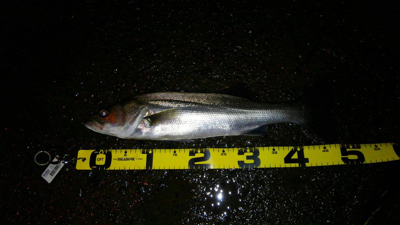山下卓也さんの投稿画像,写っている魚はスズキ