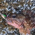 mrk586さんの石川県輪島市での釣果写真