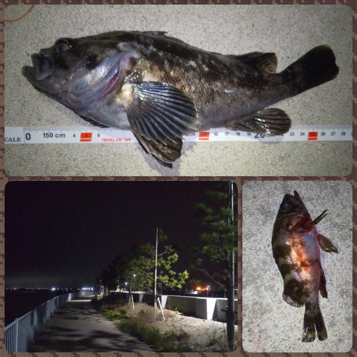 Tomo_Pandaさんの投稿画像,写っている魚はクロソイ,メバル
