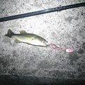 漢棒さんの青森県北津軽郡での釣果写真