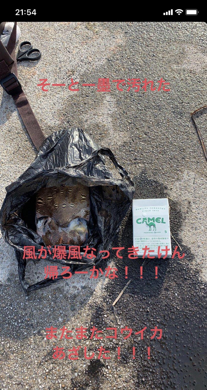 米倉大軌さんの投稿画像