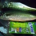 あさりさんの大阪府豊能郡での釣果写真