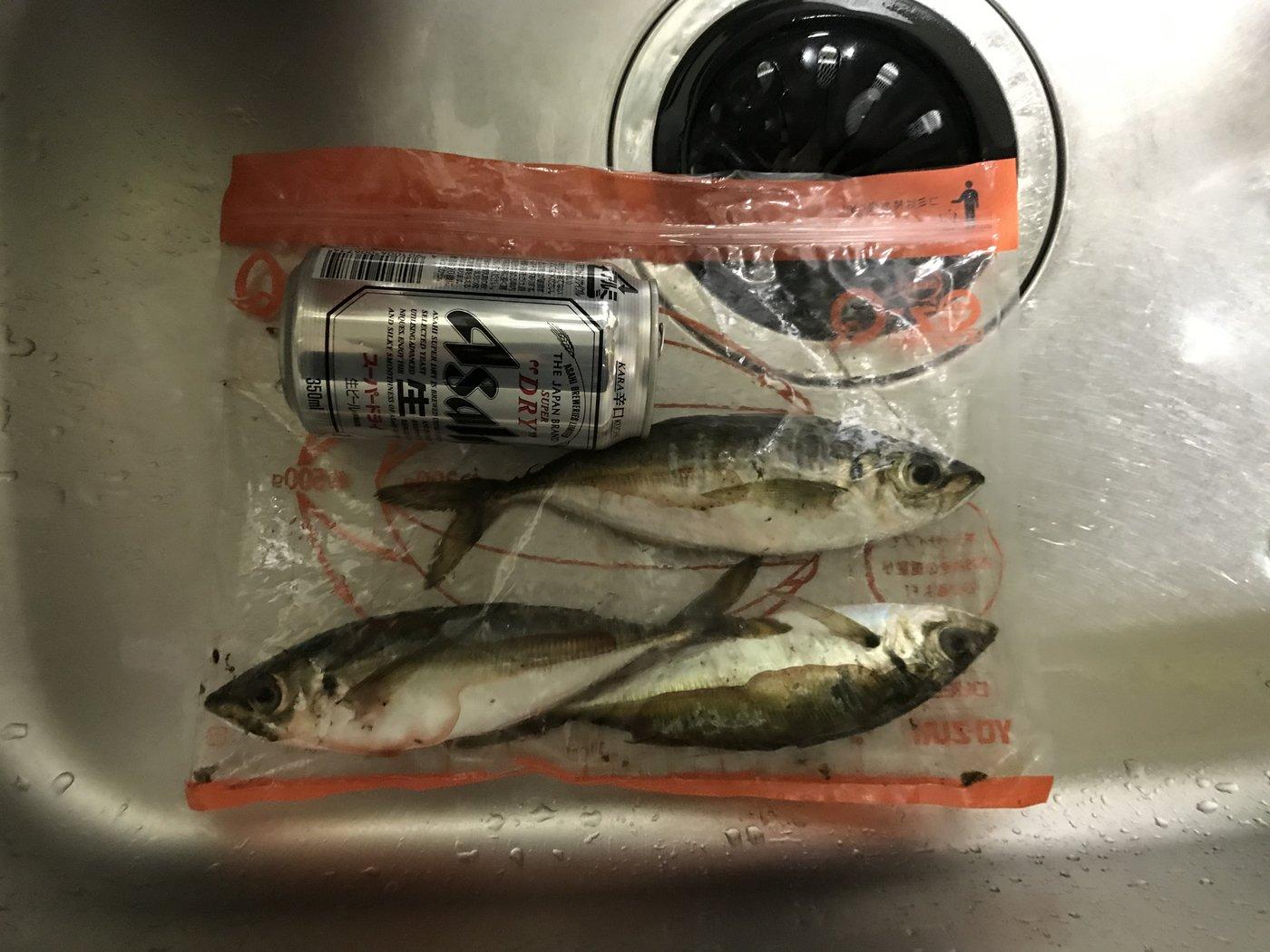 こーへーさんの投稿画像,写っている魚はアジ