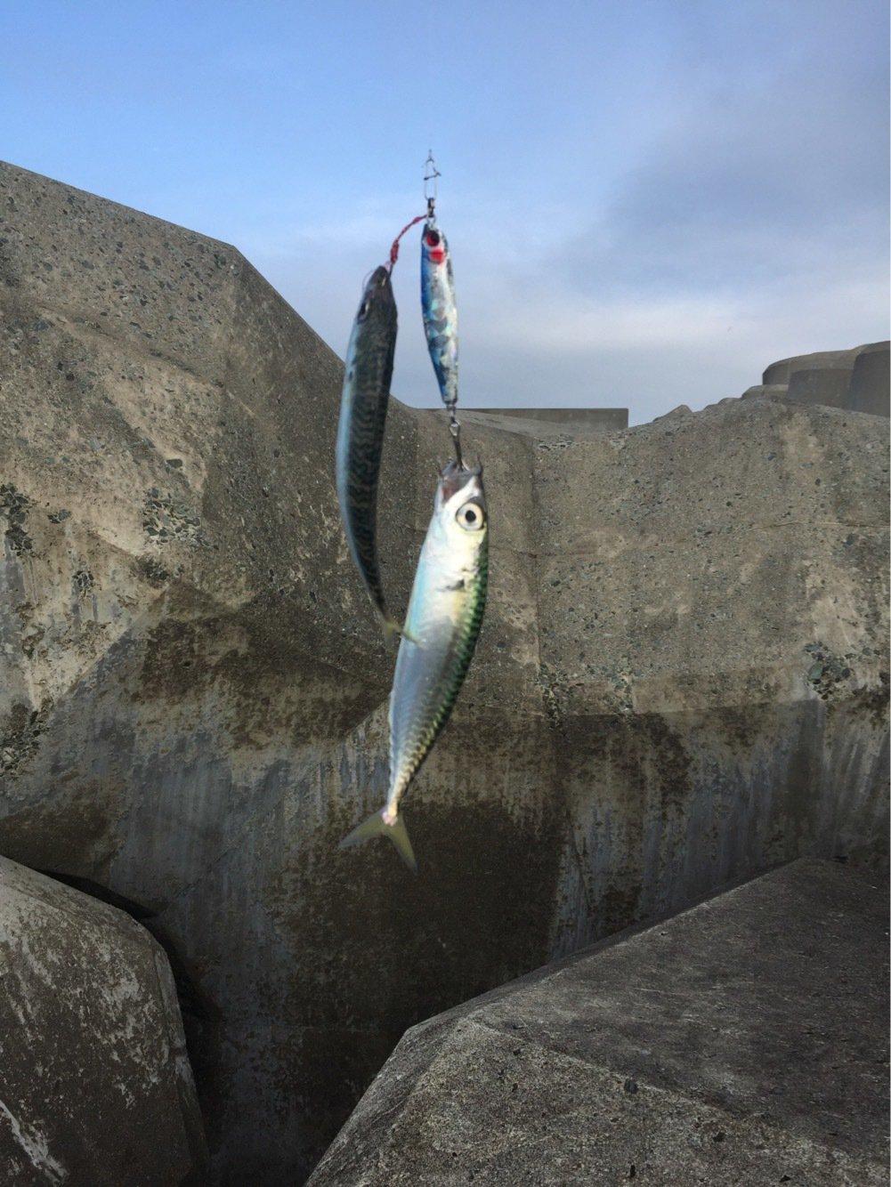 れんさんの投稿画像,写っている魚はゴマサバ