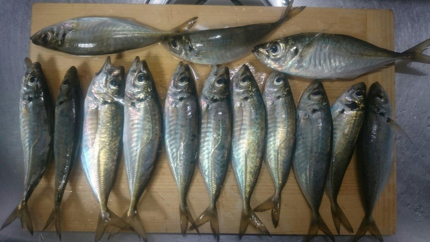 わかさんの投稿画像,写っている魚はアジ