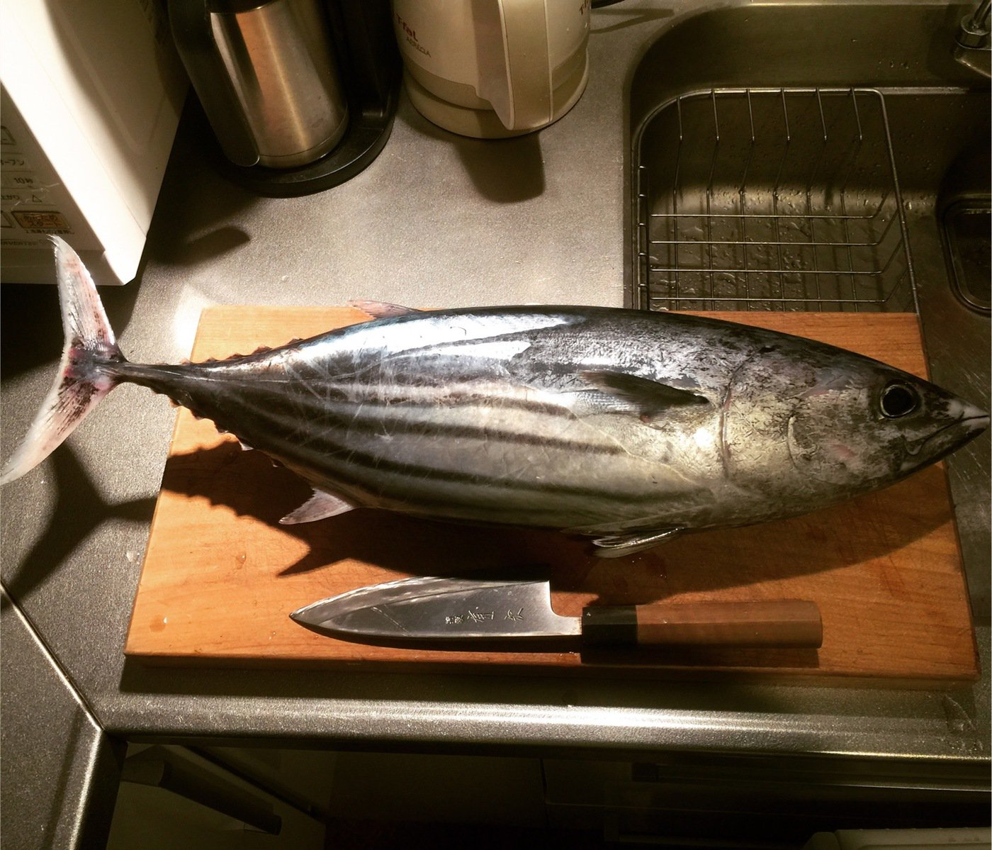 ハゼ男さんの投稿画像,写っている魚はカツオ