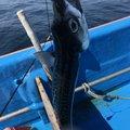 まーさんの岩手県釜石市での釣果写真