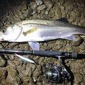 ナオキさんの鹿児島県薩摩川内市での釣果写真