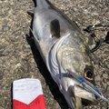 レイルスターさんの佐賀県での釣果写真