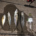 YOSHIKIさんの新潟県西蒲原郡での釣果写真