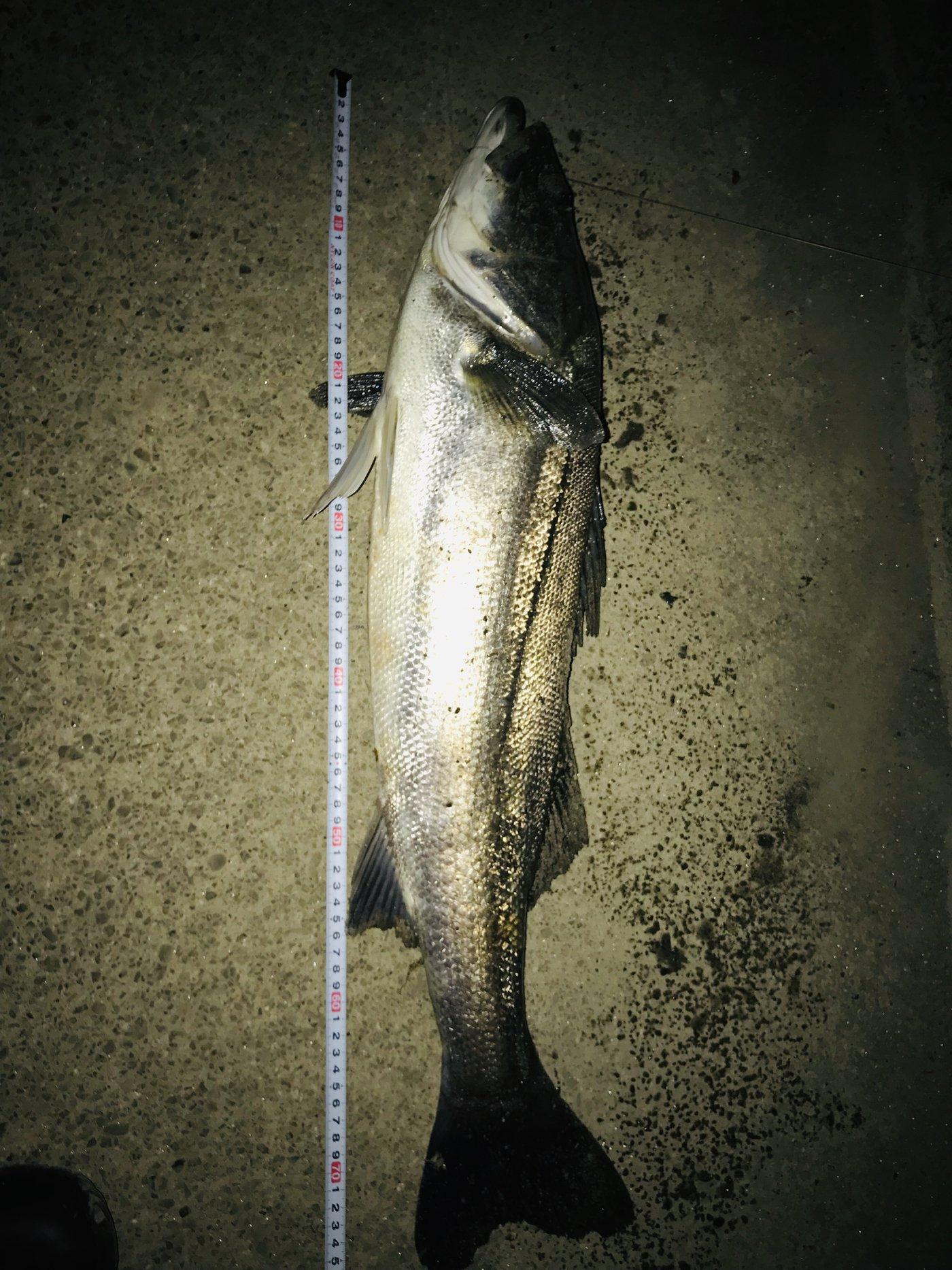 もえさんの投稿画像,写っている魚はスズキ