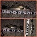 ヴァナナさんの山口県熊毛郡での釣果写真