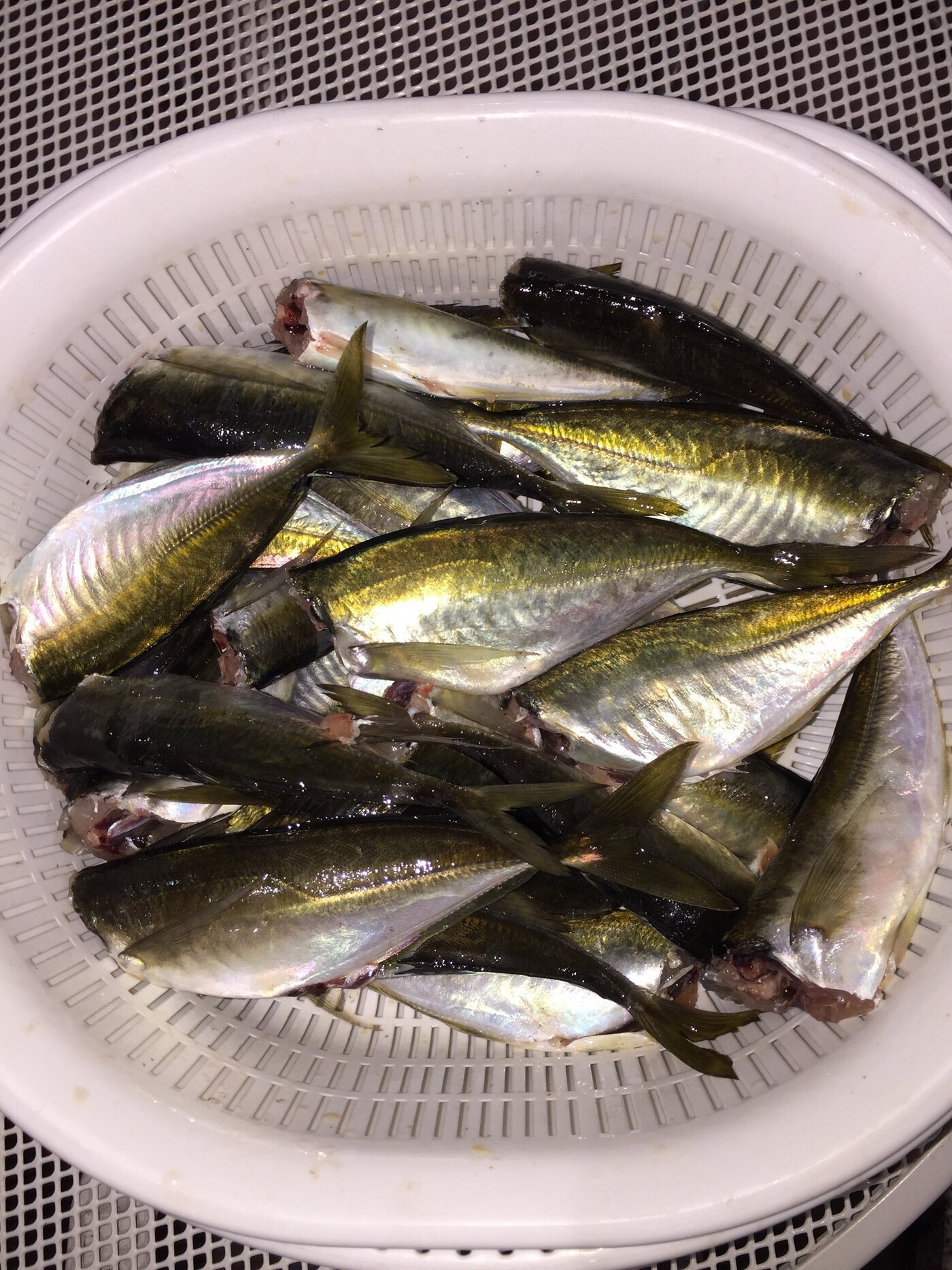 波那の慶治さんの投稿画像,写っている魚はアジ