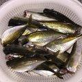 波那の慶治さんの大分県津久見市での釣果写真
