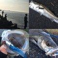 かいさんのマサバの釣果写真