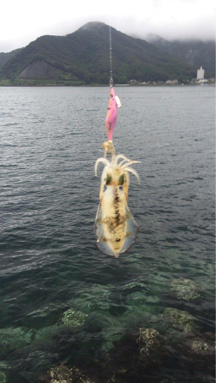 ハルさんの投稿画像,写っている魚はアオリイカ