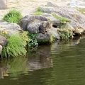 TAMEZOさんの宮城県刈田郡での釣果写真