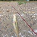 Macさんの大分県での釣果写真
