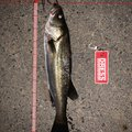 Mr.NRHDさんの茨城県ひたちなか市での釣果写真