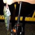 有頂天一号さんの三重県桑名市での釣果写真
