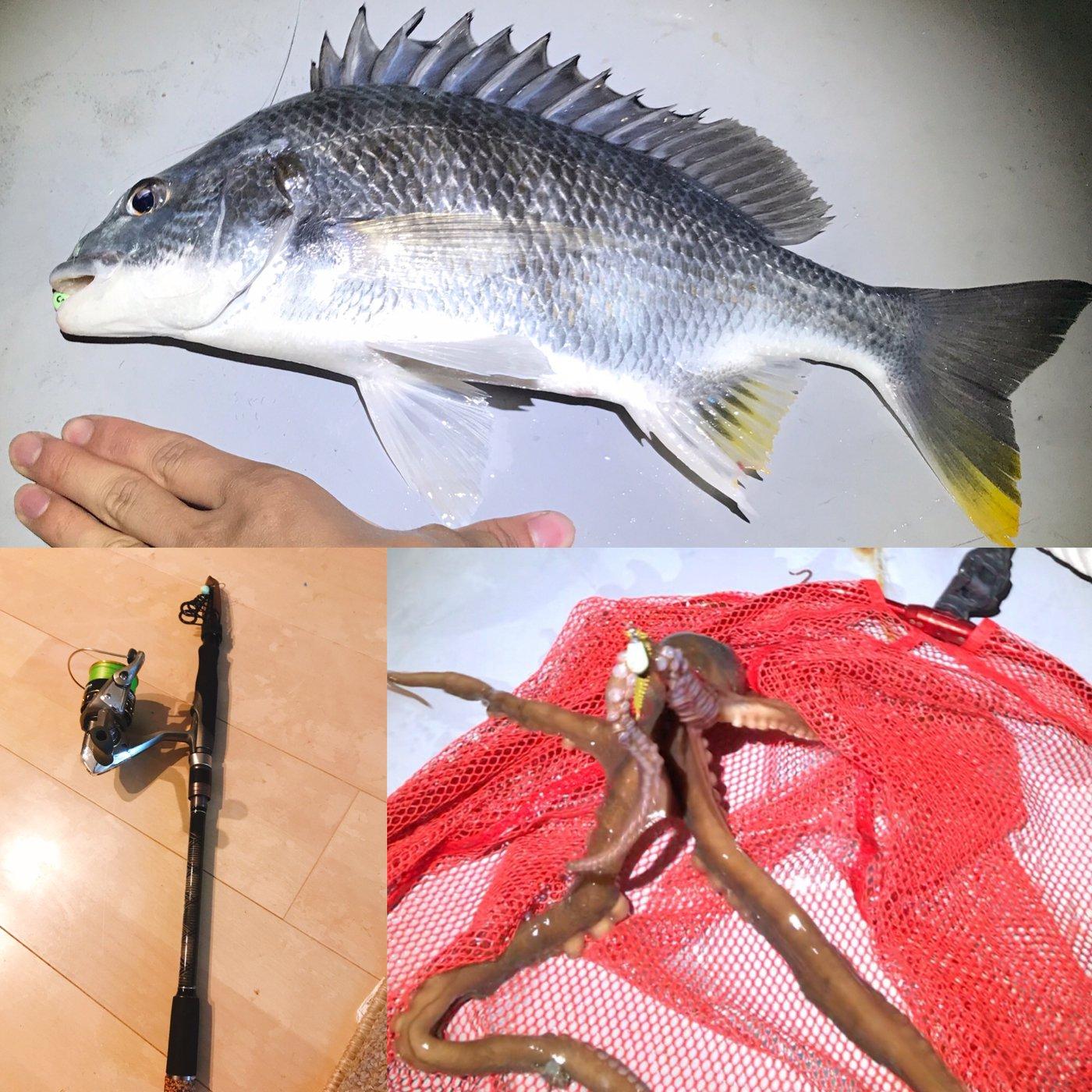 テラざわすさんの投稿画像,写っている魚はキチヌ,テナガダコ