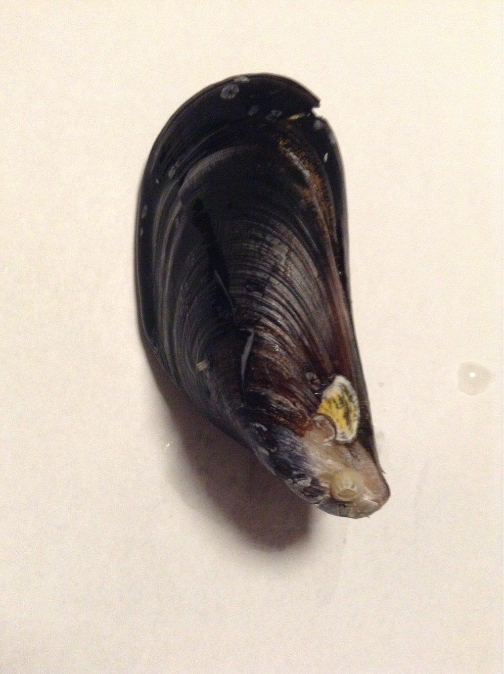 M.Mさんの投稿画像,写っている魚は