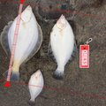 kathuさんの北海道檜山郡での釣果写真
