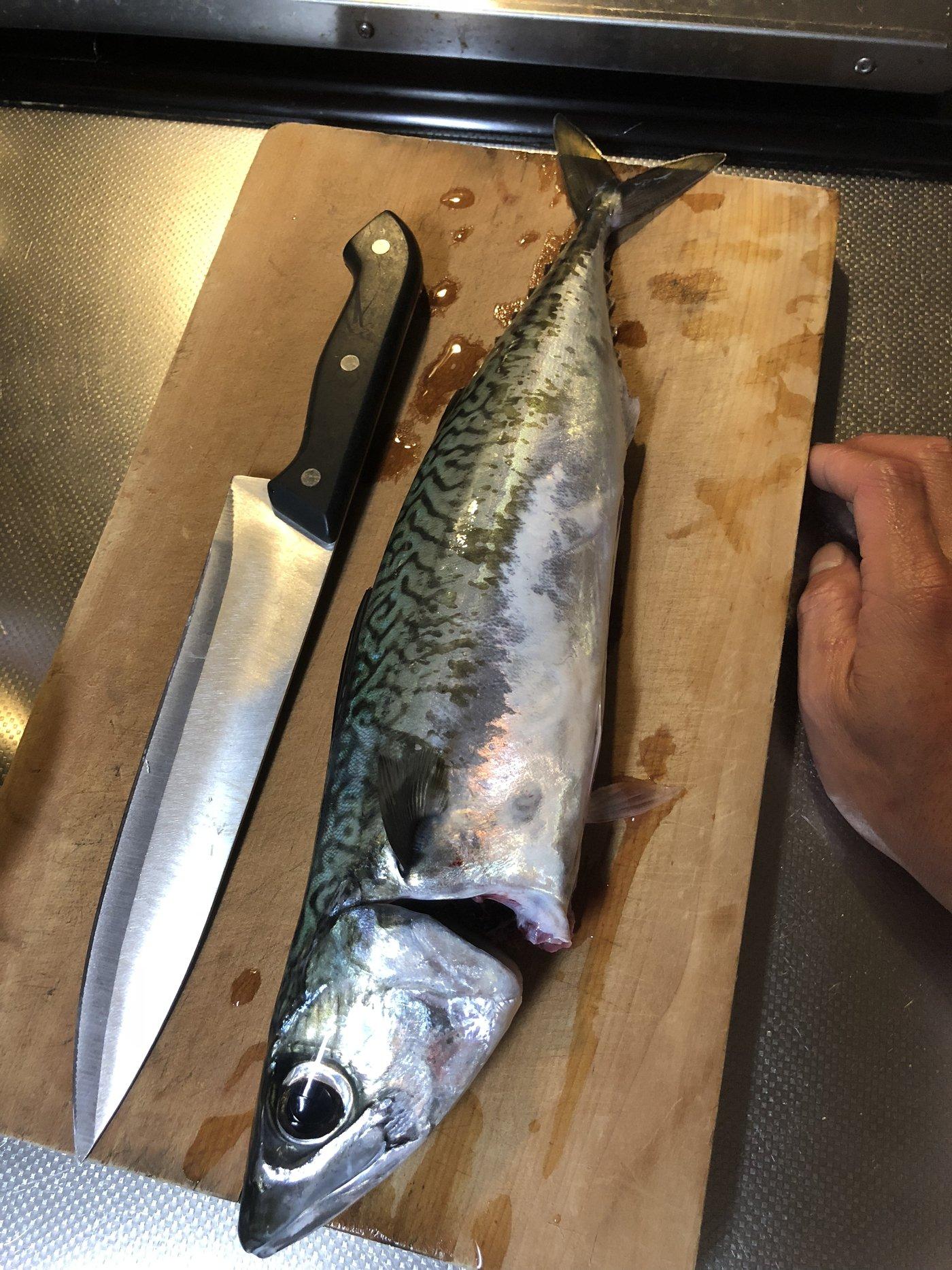 RAさんの投稿画像,写っている魚はマサバ