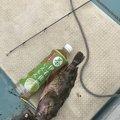 えいちゃんさんの京都府宮津市での釣果写真