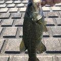 Yomaさんの埼玉県での釣果写真
