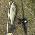 アントノフさんの岡山県での釣果写真