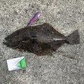 まごちんさんの静岡県熱海市での釣果写真