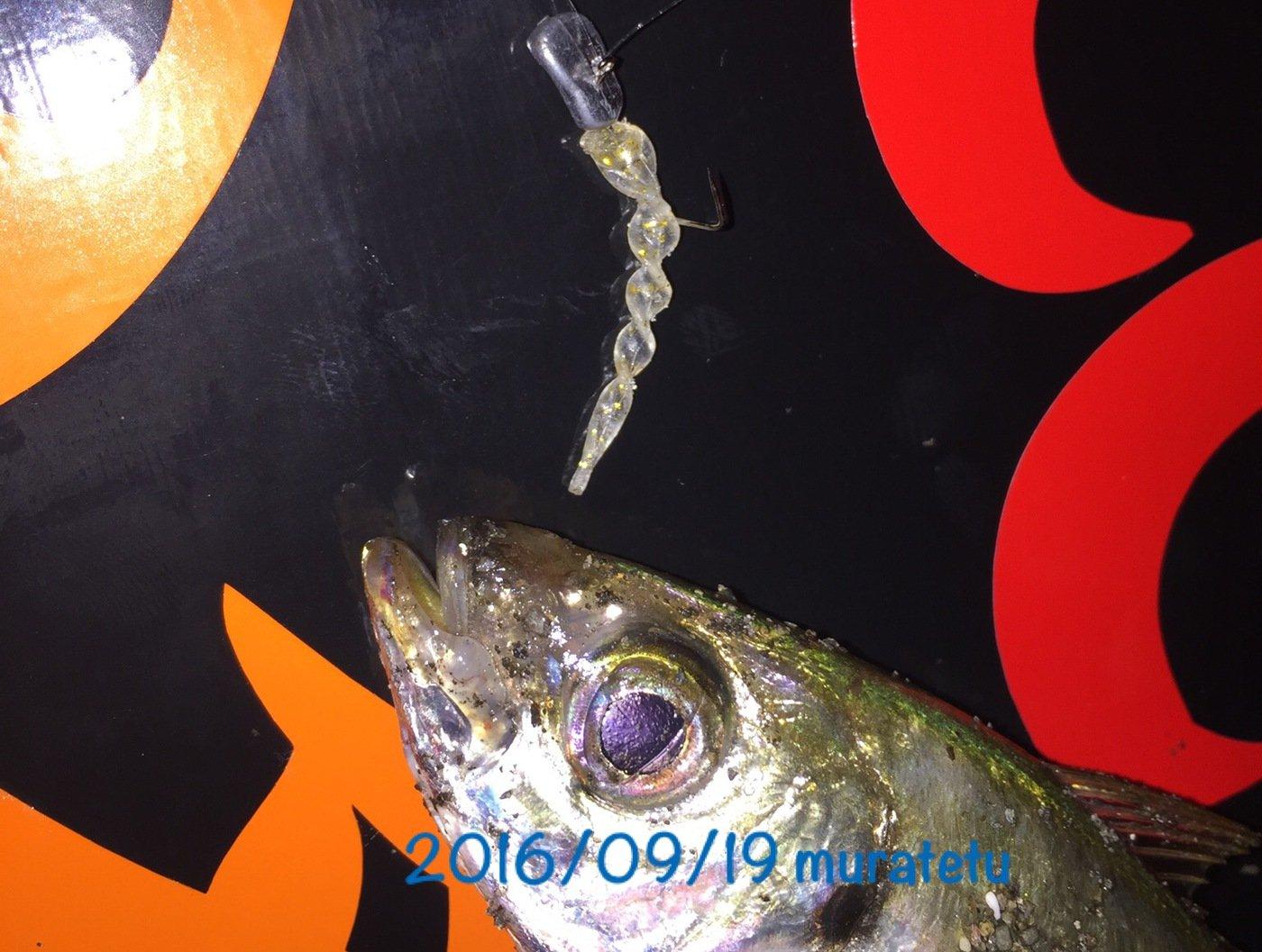 ムラテツさんの投稿画像,写っている魚はアジ
