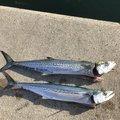simomuさんの石川県野々市市での釣果写真