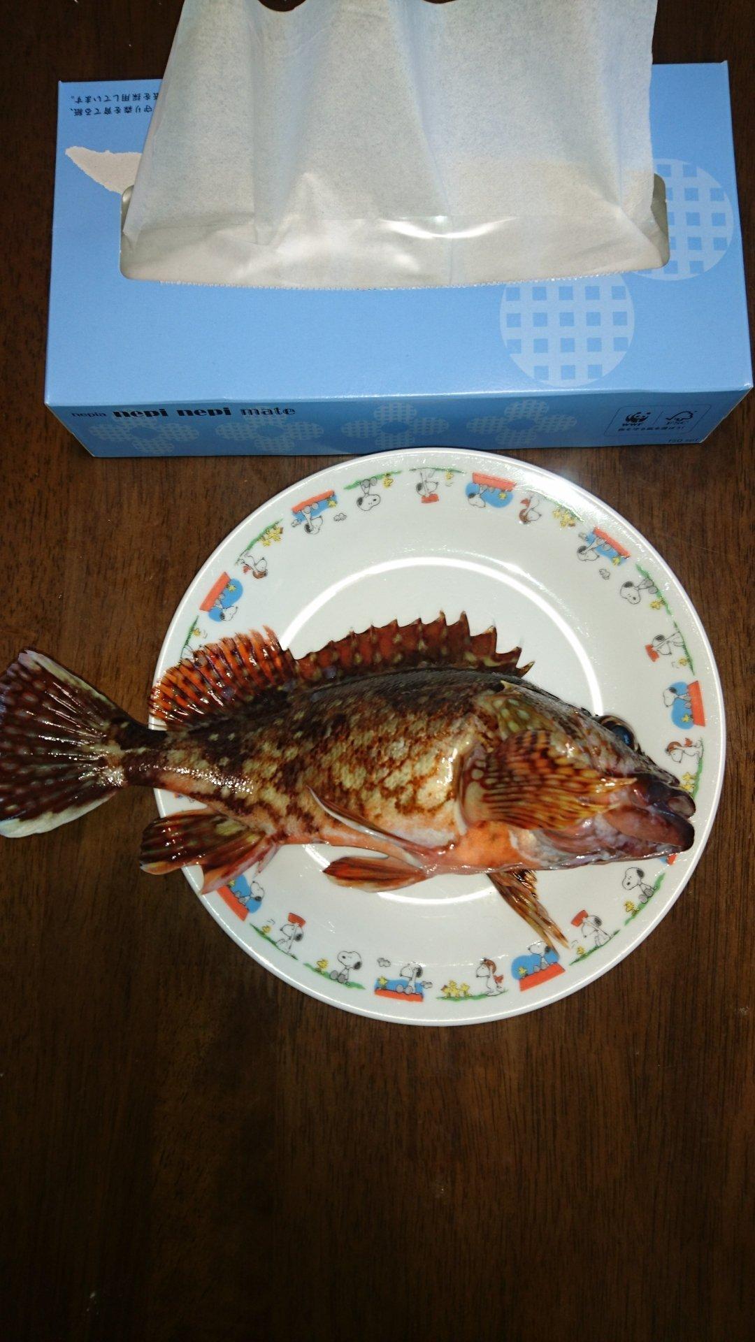 社畜Sさんの投稿画像,写っている魚はカサゴ